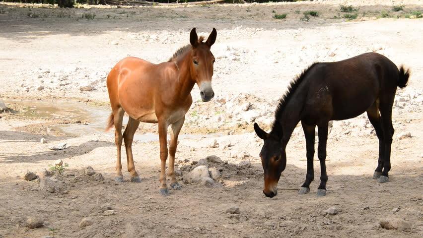Brown mule on farm. | Shutterstock HD Video #5653571
