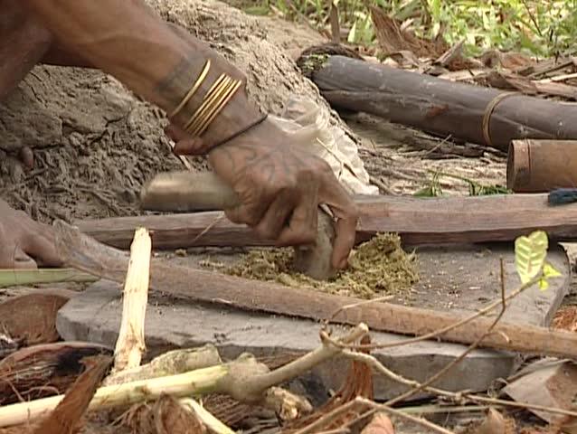 Mentawai making curare poison