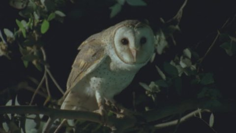 perched on tree at night