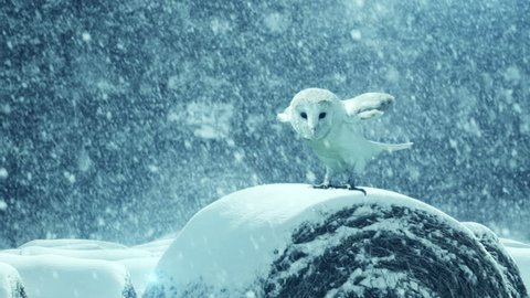 Beautiful Owl in snow storm. Slow motion 4K footage.