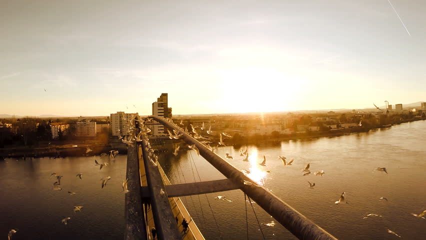 Birds flying in slow motion. aerial view. fly over. bridge panorama. lake river water. 1920x1080