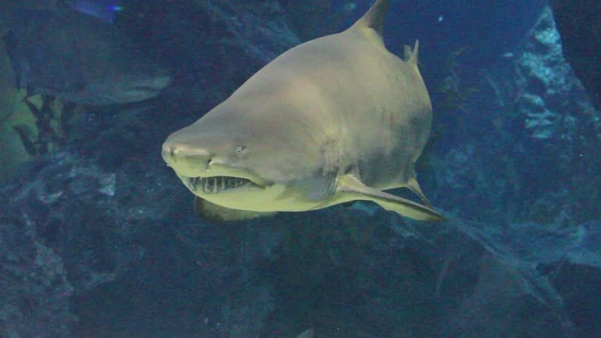 Shark underwater scene   Shutterstock HD Video #5892311