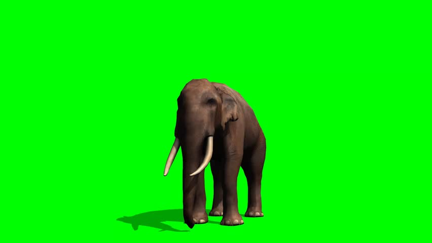 African Elephant eats - green screen #5931551