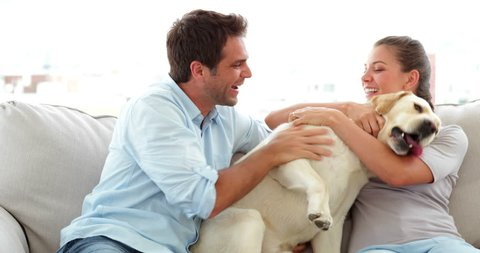 Cute couple calling their labrador dog to the couch at home in living room