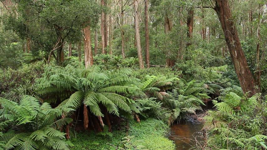 Old growth rainforest australian landscape this for Australian rainforest