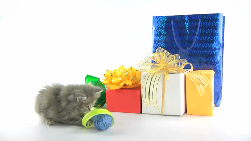 Cat looks inside birthday gift bag against white background v4 kitten gift box and ball of yarn hd stock video clip negle Image collections