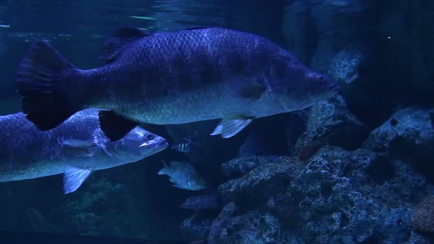 Marine fishes   Shutterstock HD Video #6048671