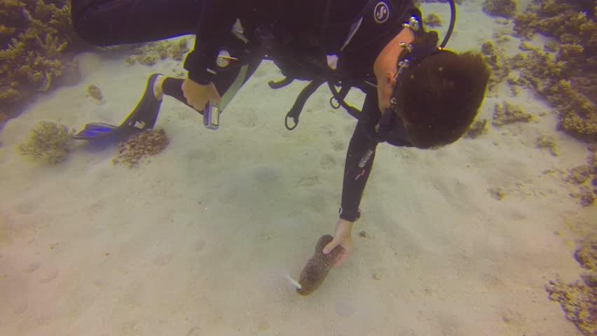 CAIRNS, AUSTRALIA - CIRCA June 2013 :scuba diver picks up something form a sea cucumber