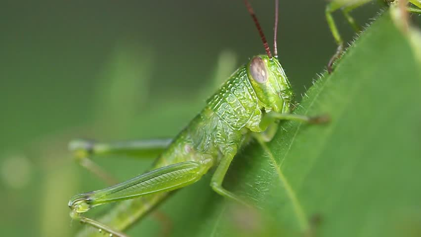 Header of grasshopper