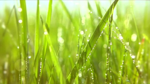 Grass with dew drops. Blurred Grass Background With Water Drops closeup. Nature. Environment concept. Slow motion 240 fps. HD video footage 1920x1080