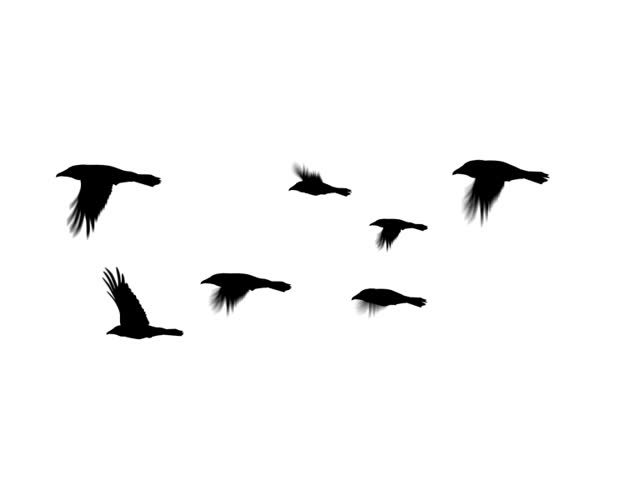 Seven crows flying together. Computer generated and seamlessly loopable. (This is a PAL version of clip 589060)