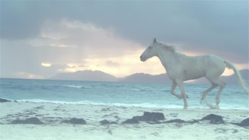 Stock Video Clip of Horse running on beach 5 | Shutterstock - photo#20