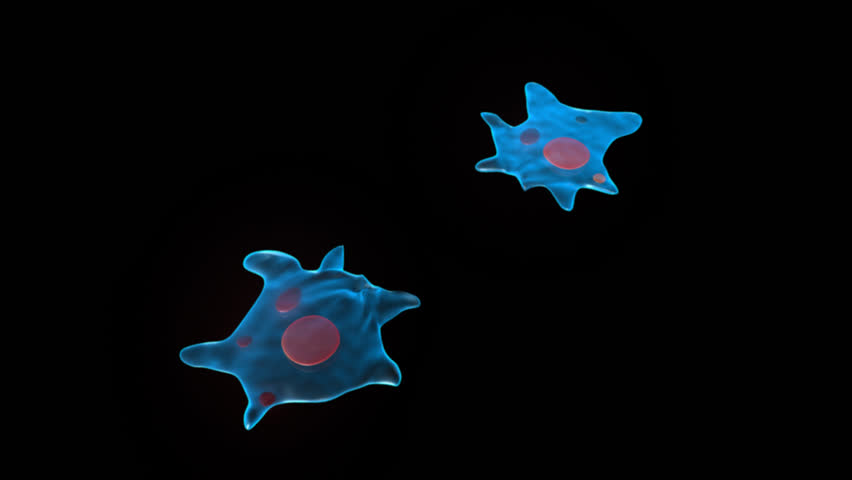 Header of Amoeba