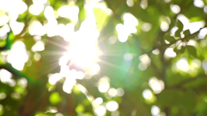 Sunlight Solar Power through leaves and branches of a tree 1
