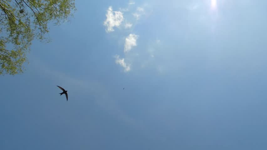 Image result for blue sky with swallows