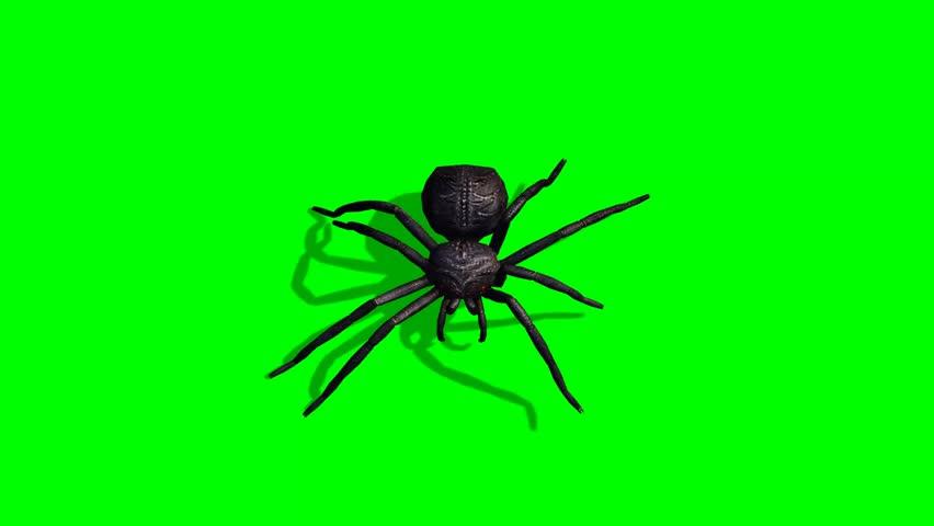 Spider walks - green screen