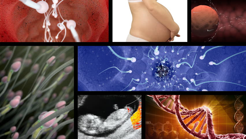 Collage of footage related to pregnancy and reproduction. Seamless loop.