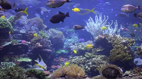 Aquarium, Fish Tank, Coral Reef, Animals, Nature