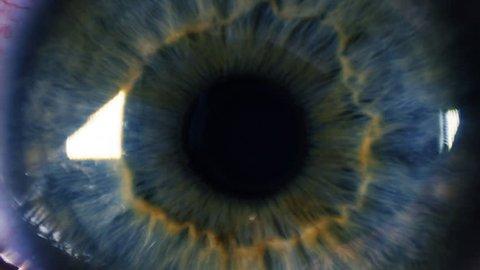 Eye iris and pupil macro