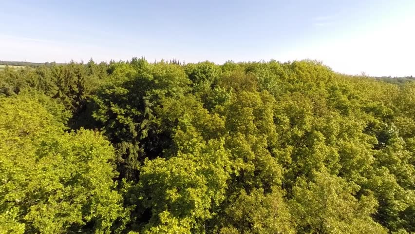 Aerial shot of a forest in Germany