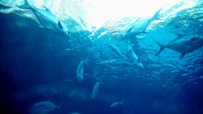 Exotic salt water fish. | Shutterstock HD Video #670861