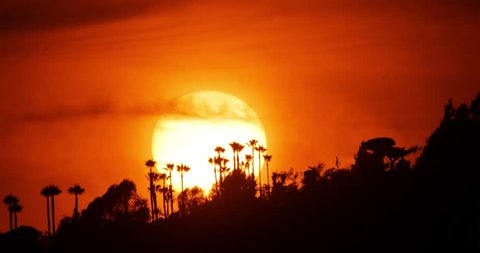 Beautiful sunset sun setting behind palm trees on Hollywood Hills in Los Angeles, California, 4K timelapse.