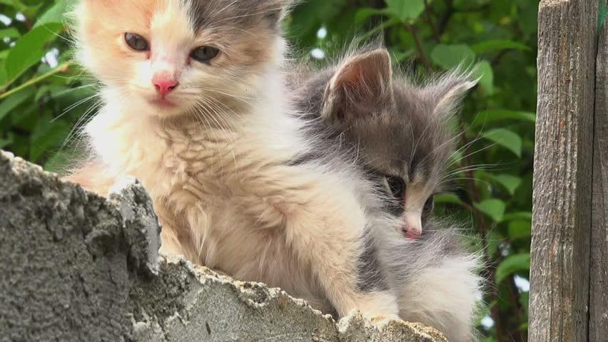 Two kitties hiding | Shutterstock HD Video #6922501