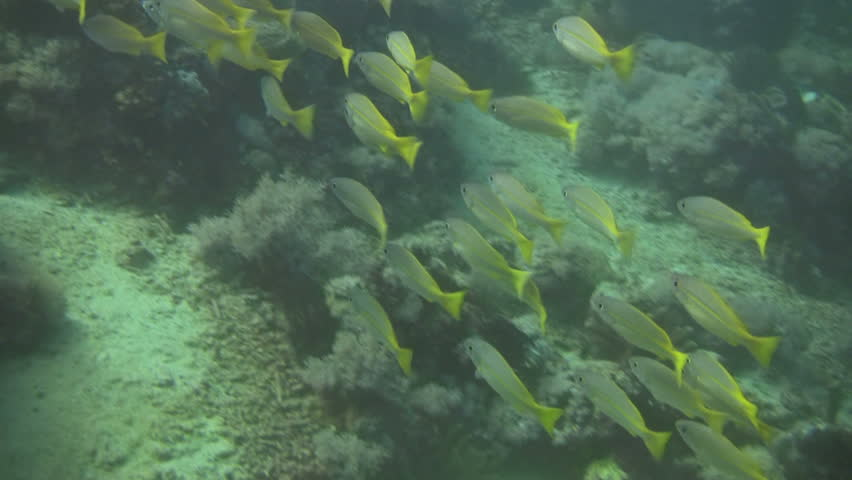 Shoal of small fish in a coral reef | Shutterstock HD Video #697699