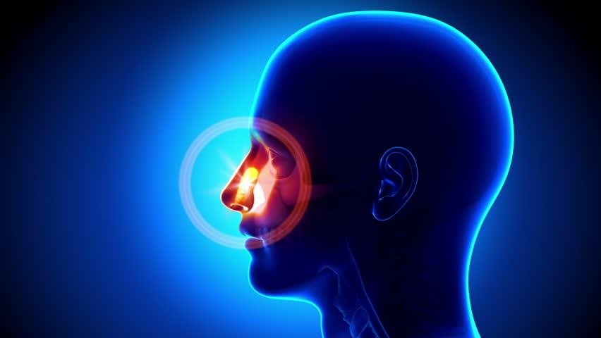 Sinus - Nose - Pain concept