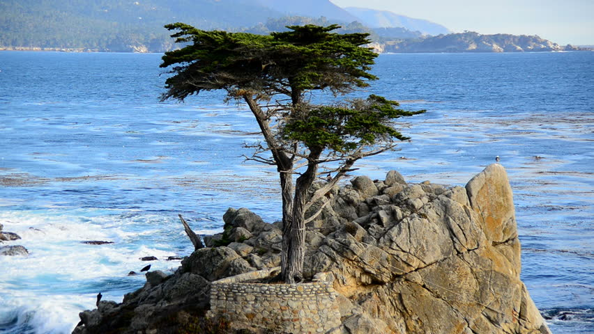 Lone Cypress Tree Pebble Beach Monterey California Hd Stock Video Clip