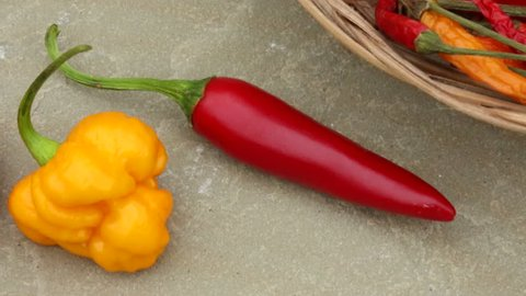 Hot Chili Peppers - Bhutlah Red, Morouga Scorpion (yellow) and a Jalapeno Pepper.