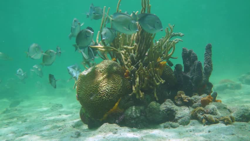 Sea Bottom Of The Sea Fish Seabed Sea: Caribbean Sea Underwater On Shallow Seabed With Coral Reef