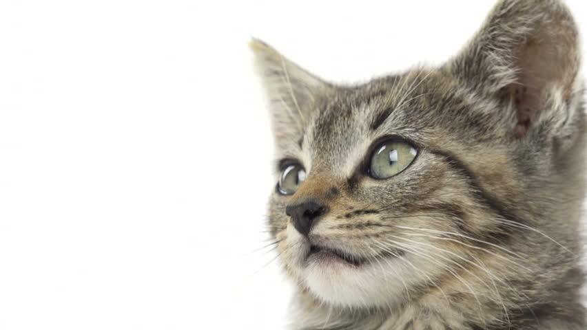 Cute Baby Tabby Kitten On Stock Footage Video 100 Royalty Free 7755811 Shutterstock