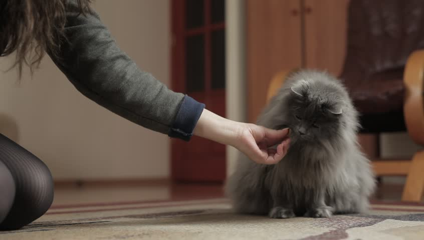 Female feeding the cat. Cat eating from hand. | Shutterstock HD Video #7775308