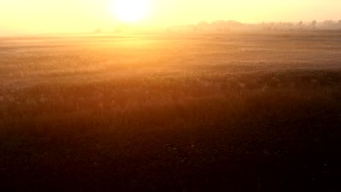 Sunrise over the meadow in a foggy autumn day. Aerial shot