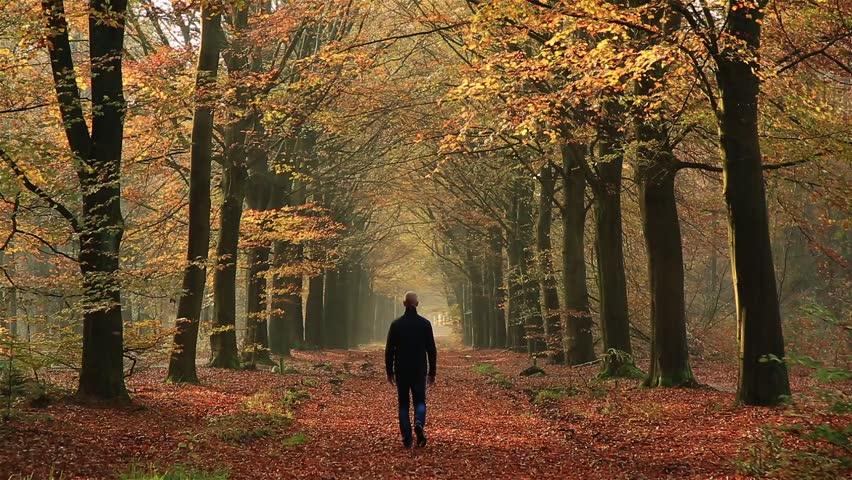 """Képtalálatok a következőre: walk in forest"""""""
