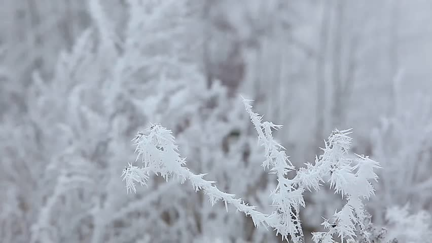 Shrubs and trees covered with white rime ice swaying in the wind | Shutterstock HD Video #8086981