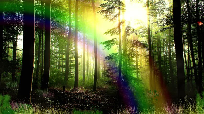 Enchanted forest and rainbow background