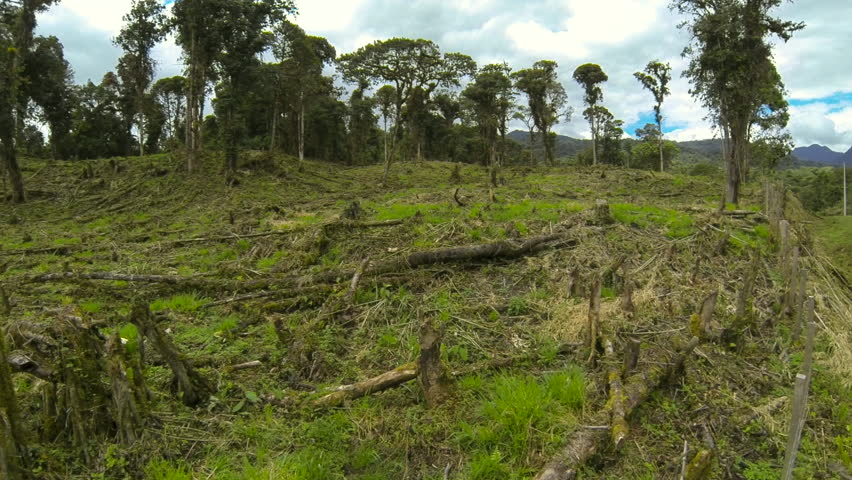 Montane rainforest destroyed for cattle ranching. Original trees hung with epiphytes are still standing at the top of the hill. At 2,200m elevation on the Amazonian slopes of the Andes in Ecuador.