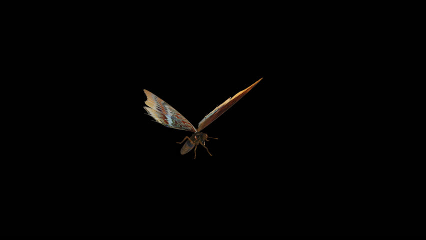 Butterfly - 3D - Round Flying - 07 L - Two Tailed Pasha - Large - Loop - Alpha channel