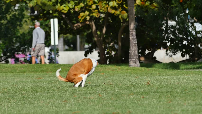 4k dog popping in the park