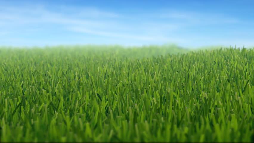 grass filed, camera panning, depth of field, LOOP