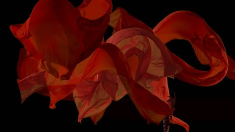 Red fabrics flowing in the air on black background. Slow motion 300 fps.