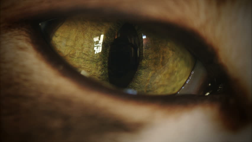 4K Cat Eye Moving and Watching Super Macro