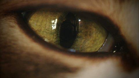4K Cat Eye Moving and Watching Super Macro