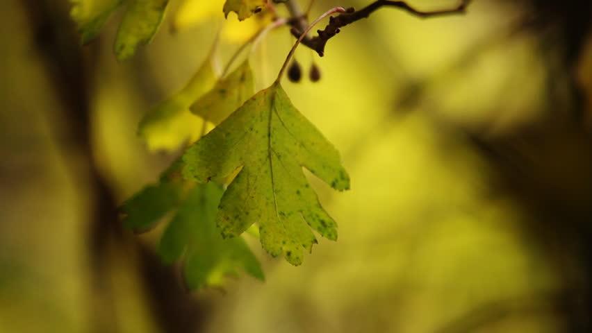Header of oaken