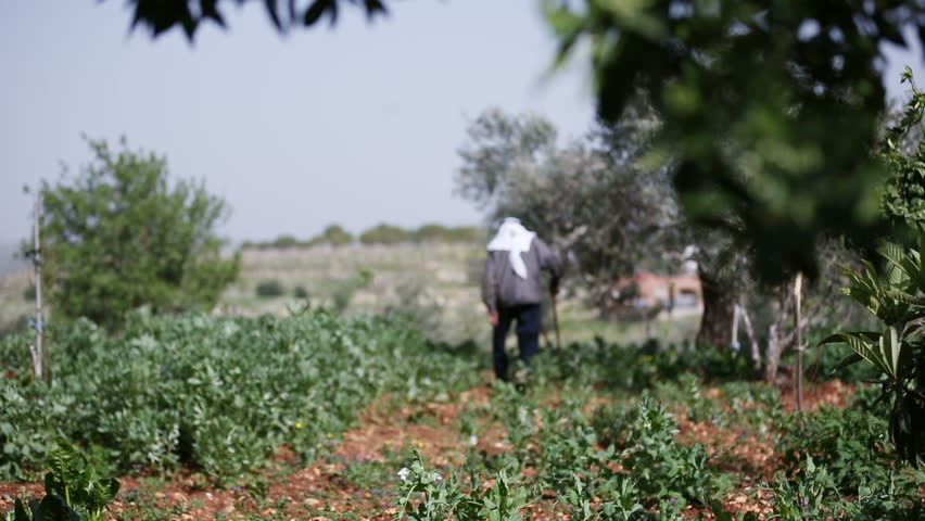 Old farmer walks in his land, Southern Lebanon. Southern Lebanon has featured prominently in the Israel-Lebanon conflict. #9360401