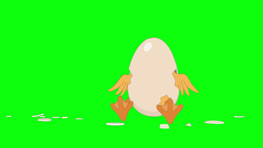 Header of chick