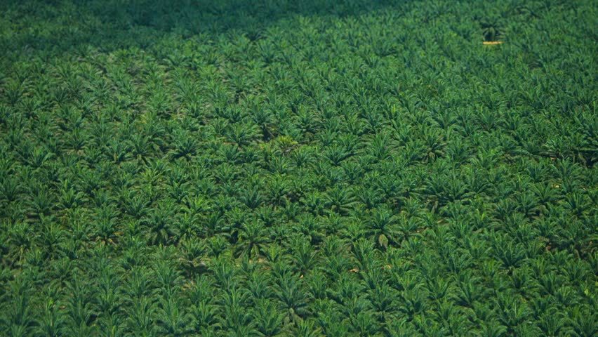 Header of African Oil Palm