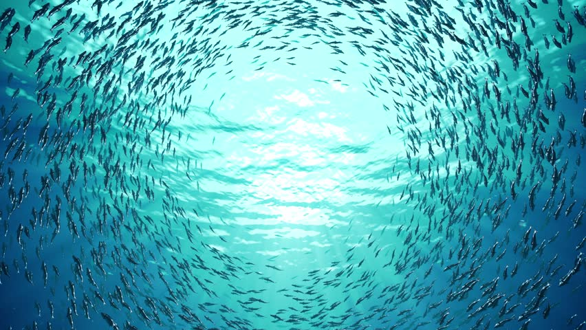 School of fish | Shutterstock Video #9743549